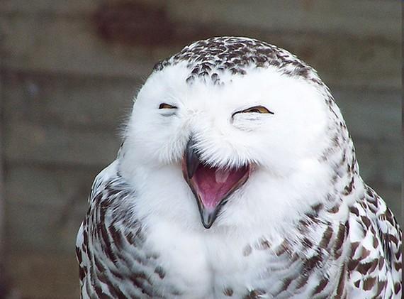 Happy+owl