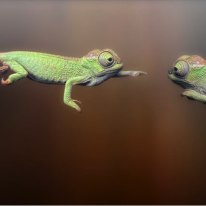 How chameleons will win the war on relevance in the new world of recruitment