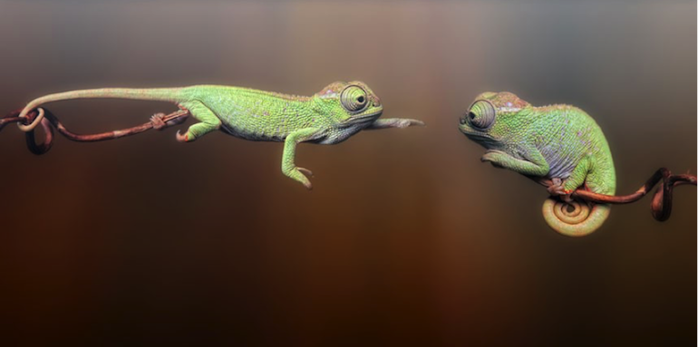 How Chameleons Will Win In The New World Of Recruitment