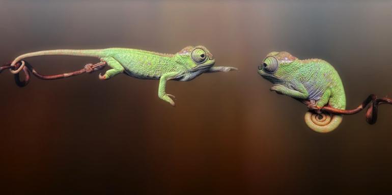 How Chameleons Will Win In The New World Of Recruitment