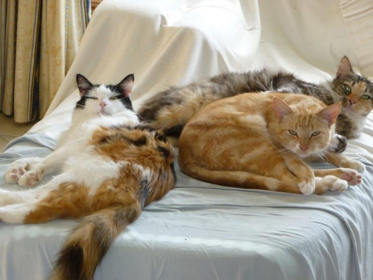 "Princess Tess, Tina and Edward: ""You woke us up!"""
