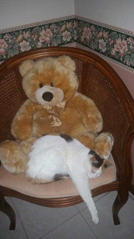 Chippy chilling with Ted