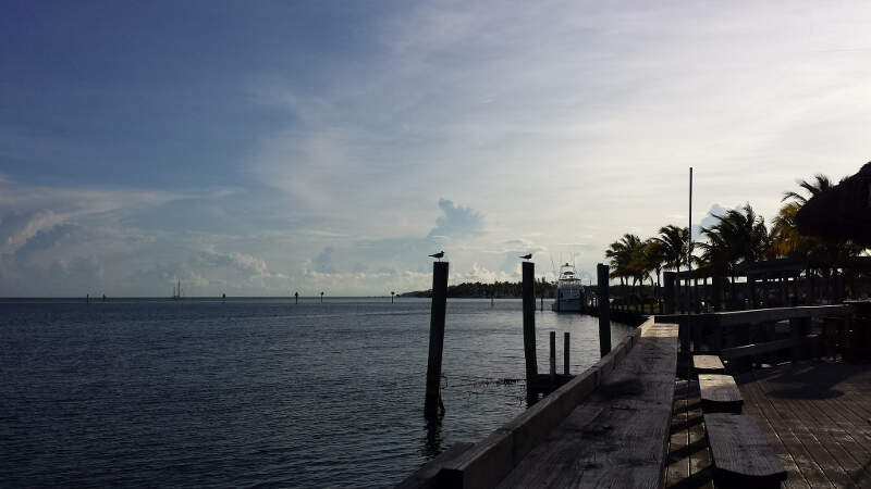 Smartest Florida